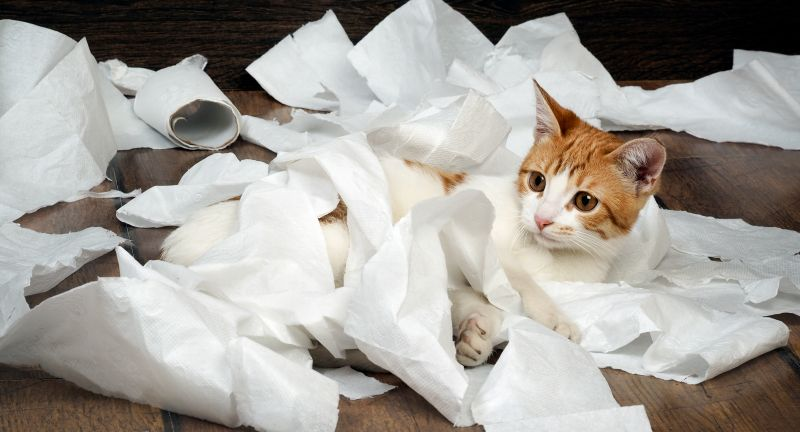 funny, paper, toilet paper, cat, kitten, toilet, play, hygiene, cleanliness, training, teach, color, breed, animal, muzzle, mouth, legs, white, wipe, to chew, tear, mess room, wooden, floor board, fur, fun, small, hooligans, red