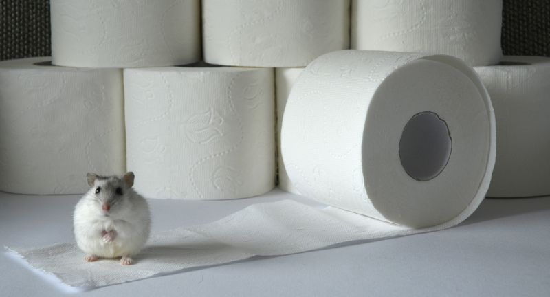 paper, toilet, roll, hygiene, isolated, white, bathroom, clean, tissue, object, toilet paper, sanitary, soft, towel, wipe, wc, toilet-paper, restroom, household, rolls, paper towel, accessories, sheet, lavatory, hoarding, hamster, collecting, shopping, isolation, stay home, stock, pile, supermarkt, corona, virus, protection, grocery